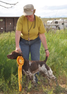 Xena 3rd in Open Derby OBC WFT 5.14